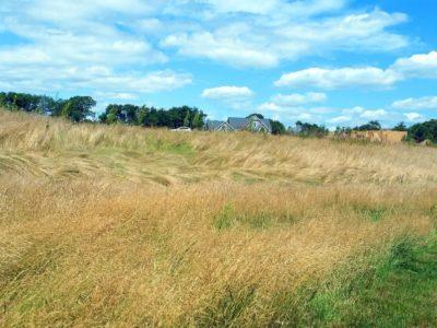 EMF - grass copy